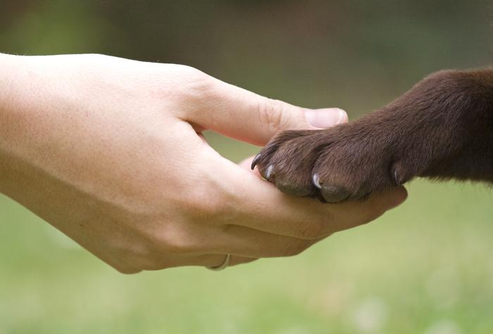 Поможем животным! Благотворительная акция для Харьковского городского приюта!