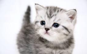Кормление взрослых кошек