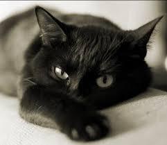 Создания подходящих условий содержания кошек в квартире