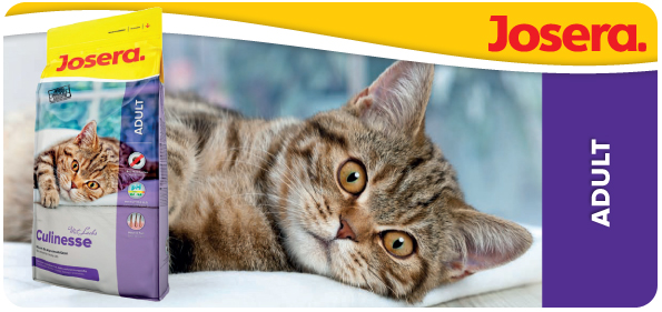 каким кормом кормить кошку при хпн | Мир котят