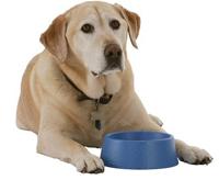 Подставки с мисками для собак - сочетание удобства и пользы