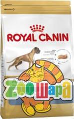 royal canin boxer 3. Black Bedroom Furniture Sets. Home Design Ideas