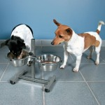 стояк для собак + 2 миски (металл)  0,75 л Ø  15 см