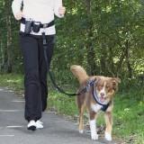Trixie Комплект для бега с собакой