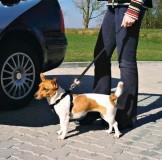 Trixie Пояс-шлея безопасности д/соб.в авто XS 20-50см