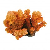Коралловая ветвь