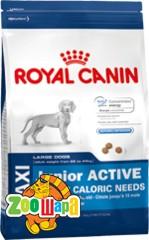 Royal Canin (Роял Канин) Maxi Junior Active, 4 кг